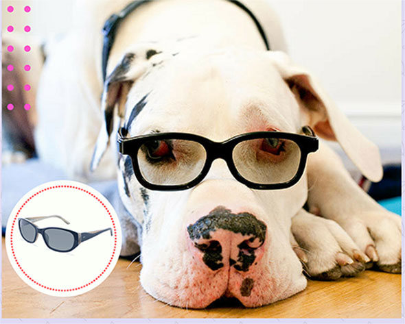 55d7a131b5e Your Dog And Your Glasses